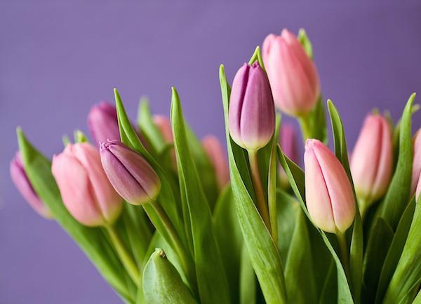 Bloemenwinkel met online bloemen