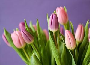 Tulpen bestellen online